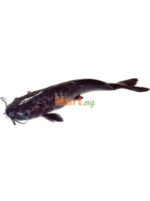 Catfish Live - 1kg