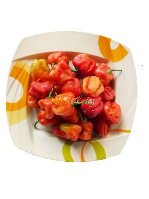 Hot Red Pepper (Rodo) - 200g